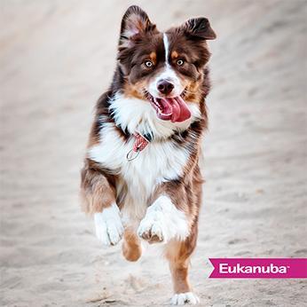Perros de Acción - Eukanuba